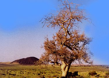 http://www.noel-de-toujours.com/images/page4/balsamier.jpg